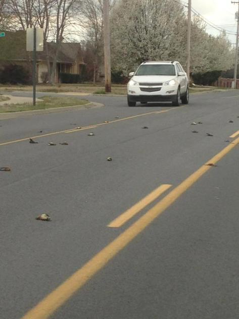 Conway dead birds
